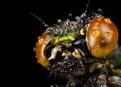 Macro Photography - Stunning Photos of Insects