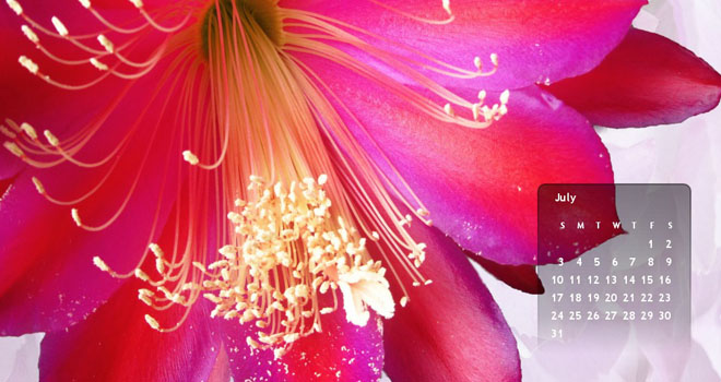 July 2011 Fireworks Flower Free Desktop Wallpaper Calendar by Paper Blog