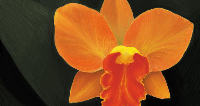 Orange Bloom by Sunny Siu