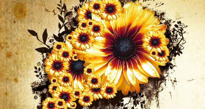 Flowers by Marcin Struniawski