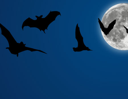 Halloween Vectors: Bats + Moon