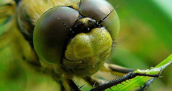 Dragonfly by ~purhipnoze