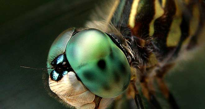DragonFly Macro by Justin Johnstone