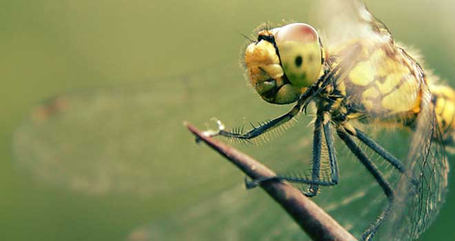 Dragonfly By *wolf-minori