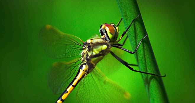 Dragonfly by Surya Fajri