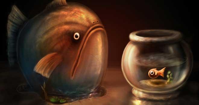 Big Fish Little Fish by Ian Field-Richards