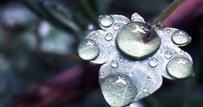 Rain January