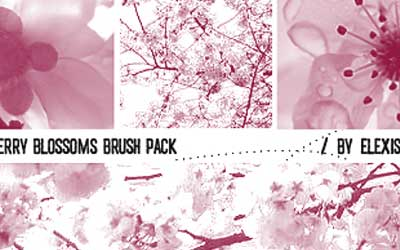 Cherry Blossoms Brush Pack