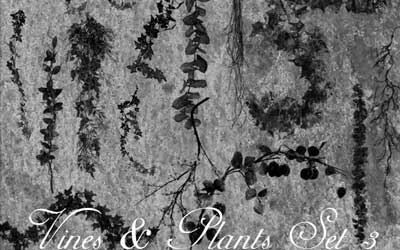 Vines And Plants Brushes Set