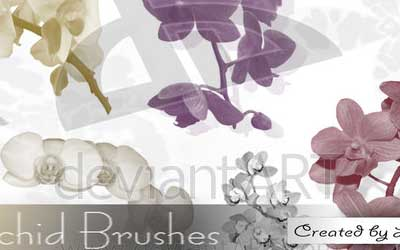 Orchid Brush Set