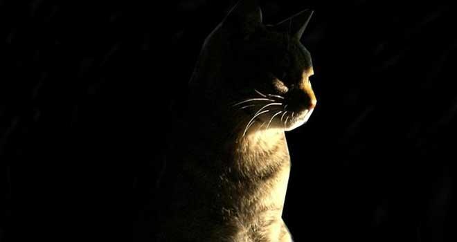 Cat by Jmcio