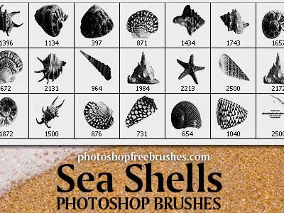 Sea Shells Free PS Brushes by fiftyfivepixels