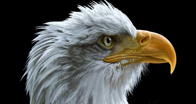 Sentinel - Bald Eagle by Bob Nolin