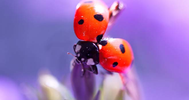 The Acrobatic Ladybug by Myriam Kieffer