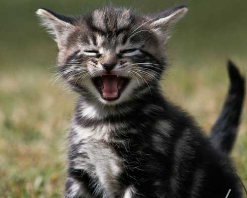 A Humorous Cat by Daniel Eriksson