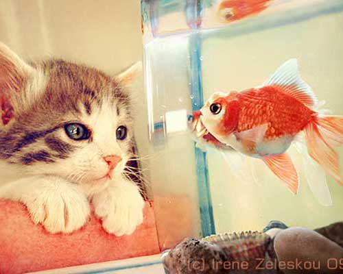 Hello Fish by Irene Zeleskou