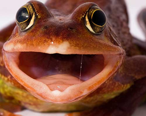 Funny Face From a Frog by AngiNelson