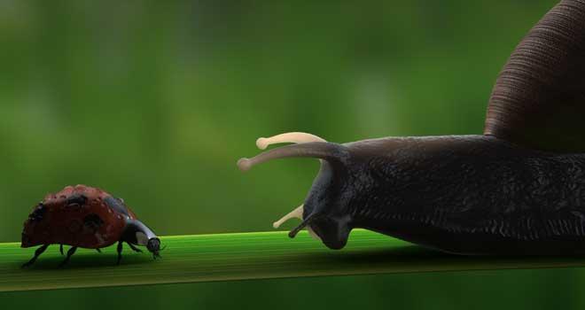 Snail & Ladybug by Nick Deboar