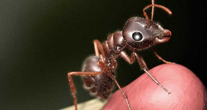 Formiga Virtual - Virtual Ant by Sandro de F. Benigno