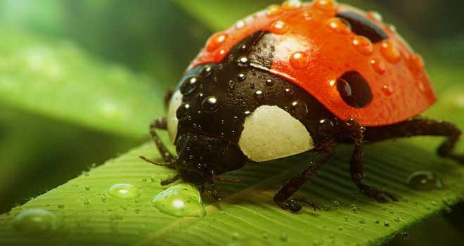 Ladybug by Andrzej Sykut