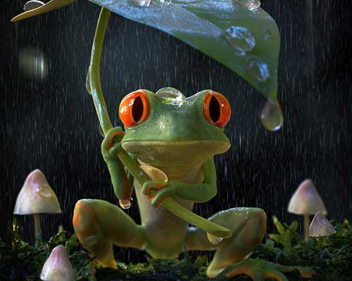 A Frog in a Rainy Place by Jesper Willumsen